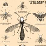 tempus-thumb
